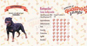 Rottweiler scheda razza