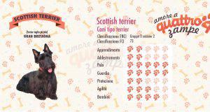Scottish terrier scheda razza