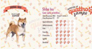 Shiba Inu scheda razza
