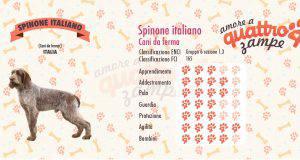 Spinone italiano scheda razza