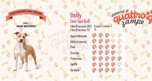 Staffordshire Bull Terrier scheda razza