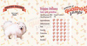volpino italiano scheda razza