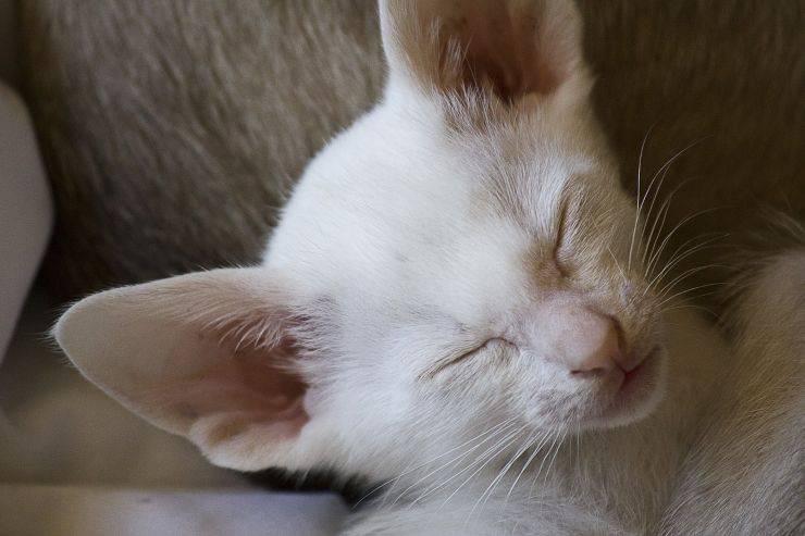 Pulire le orecchie animali