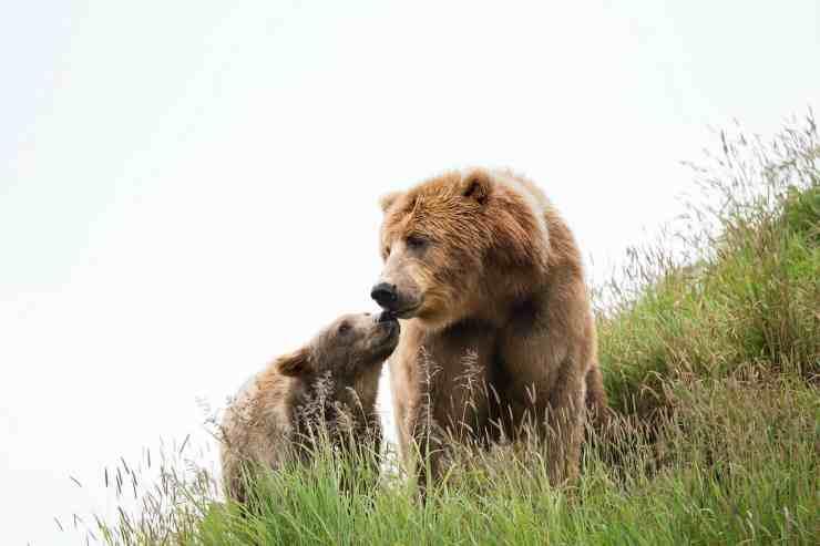 La mamma e il suo cucciolo (Foto Pixabay)