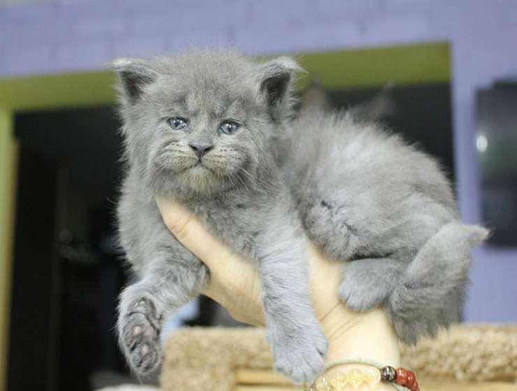 La simpatia del gattino (Foto Instagram)