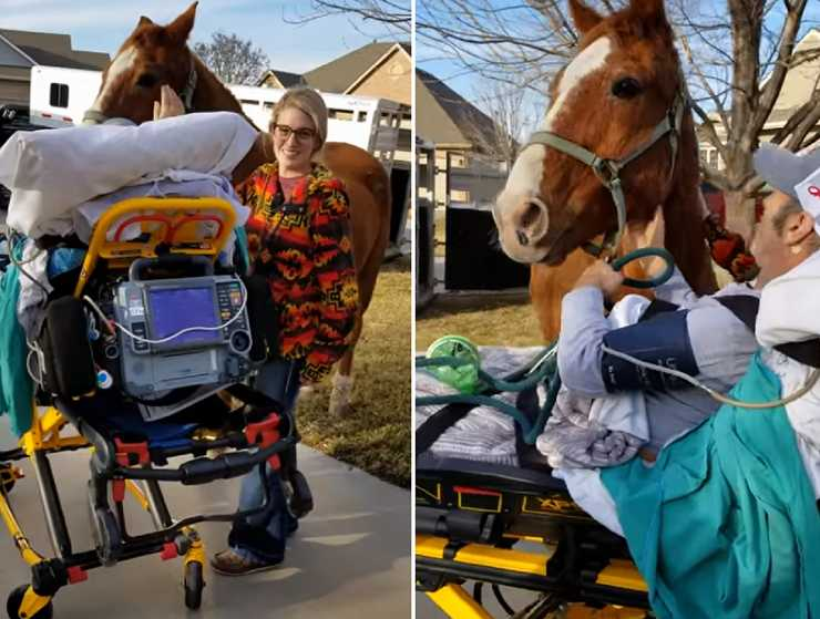 malato terminale rivede cavallo