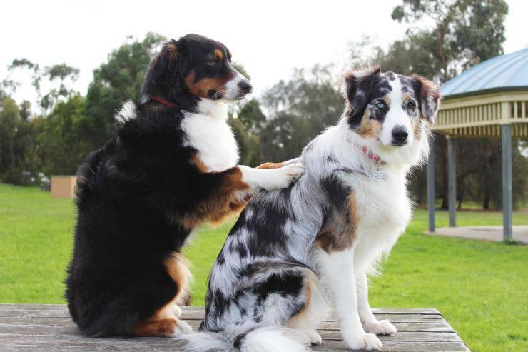 cane massaggia cane