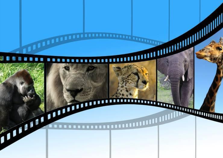 Animali sul set