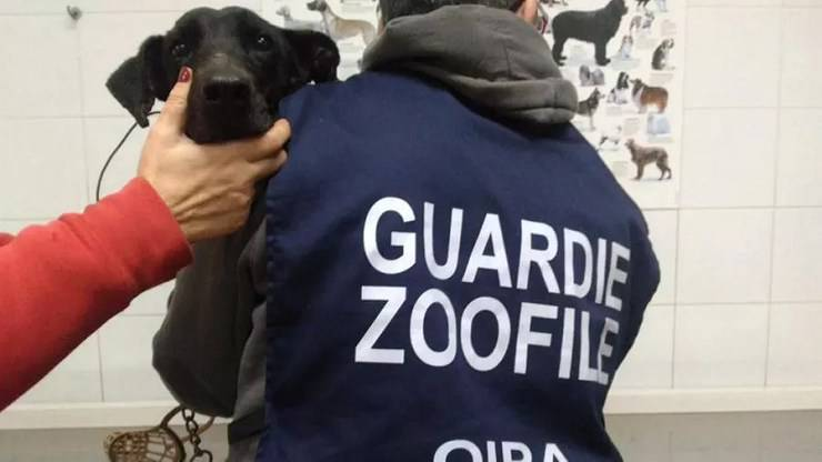 cane salvato maltrattamenti