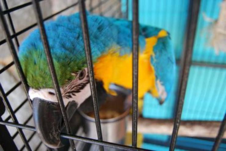 pappagallo gabbia
