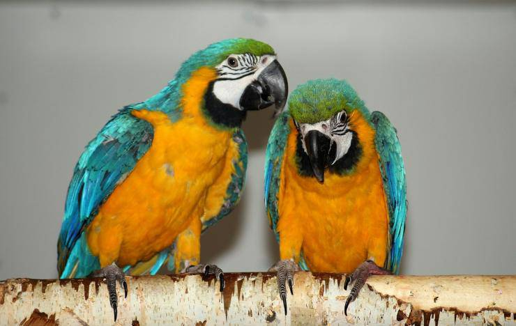 Secondo uccello esotico