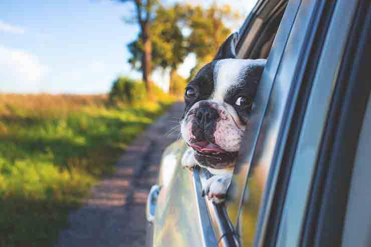 passeggiare in macchina col cane