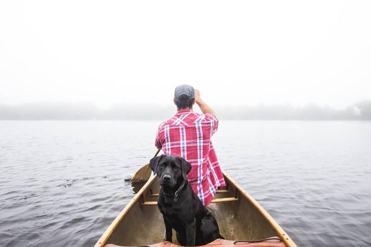 Cane in mare aperto