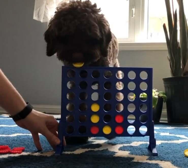 Il cane che gioca a forza 4