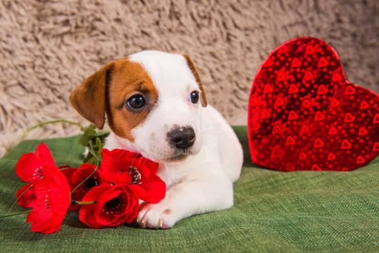 pericoli di san valentino per il cane