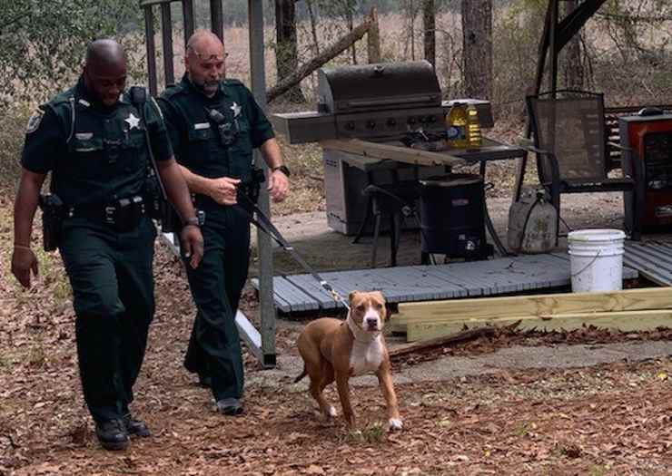 cane salva bambino smarrito