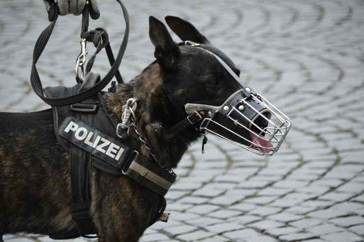 Cane pronto per l'operazione di polizia (Foto Pixabay)