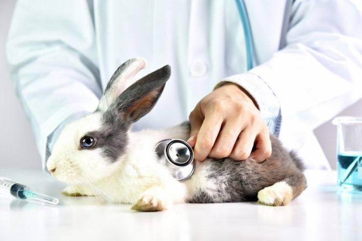 polmonite nel coniglio
