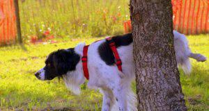 proteinuria nel cane