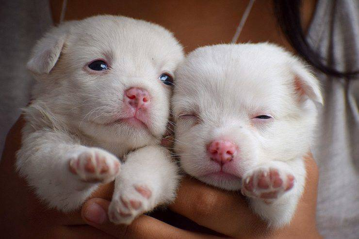 Cuccioli cane maltrattati