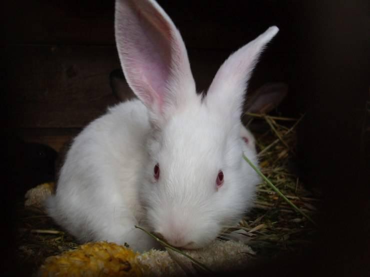 Pulire orecchie animali