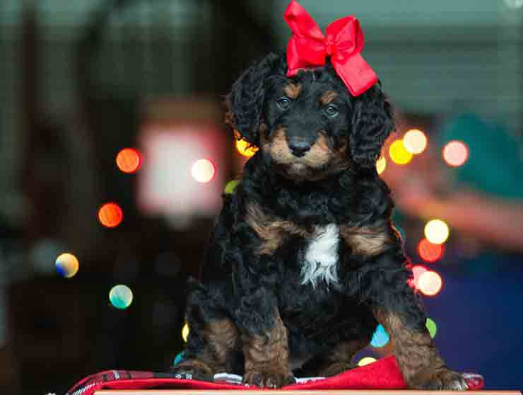 regalare animali a san valentino