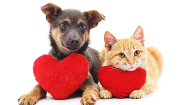san valentino per cani e gatti