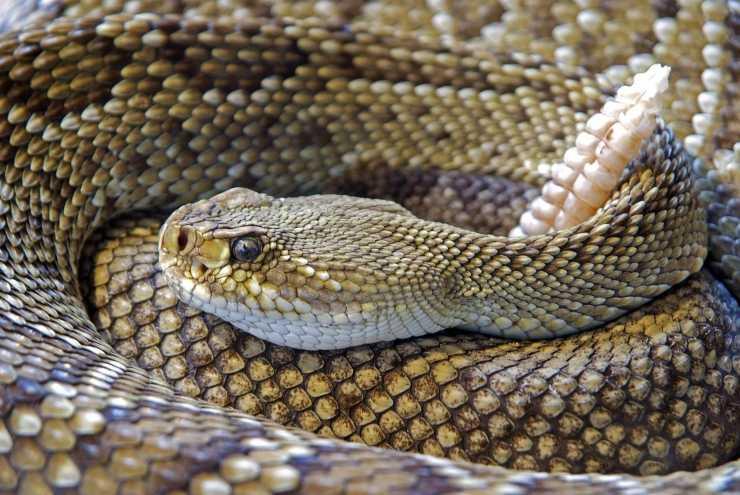 serpenti rettili