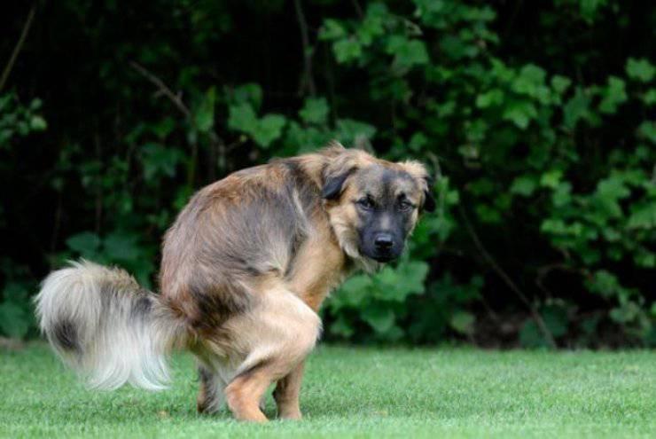 cane ti fissa mentre fa cacca