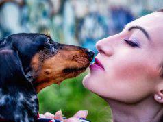 profumo preferito cane