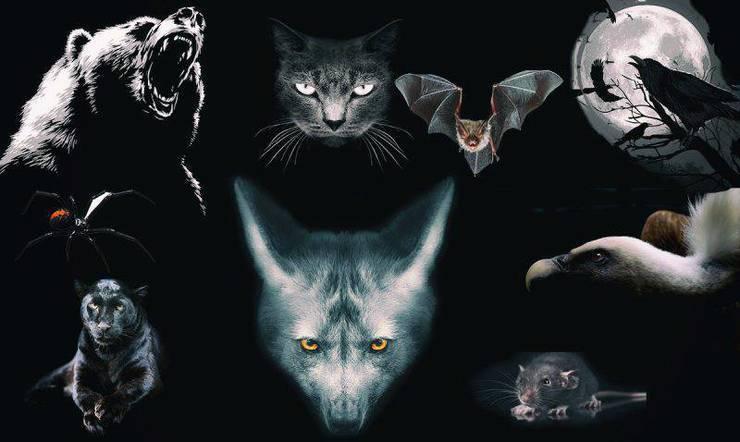 test animali