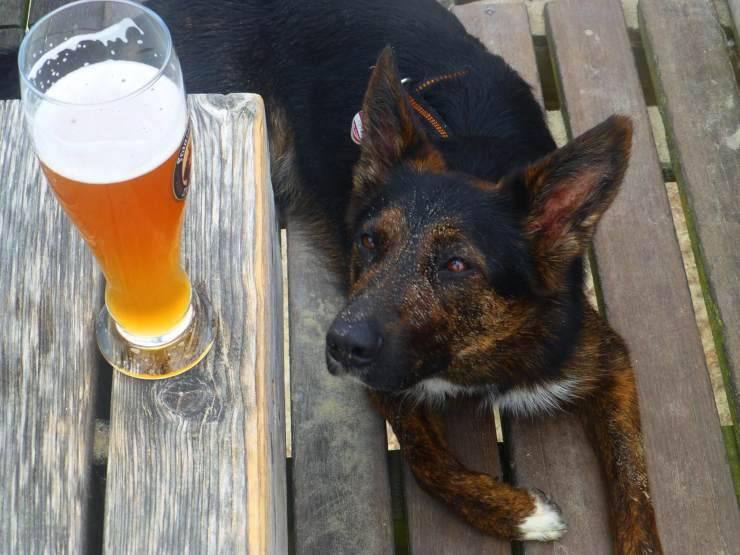 Animali e alcol