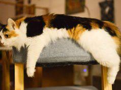 tipici esercizi per gatti anziani