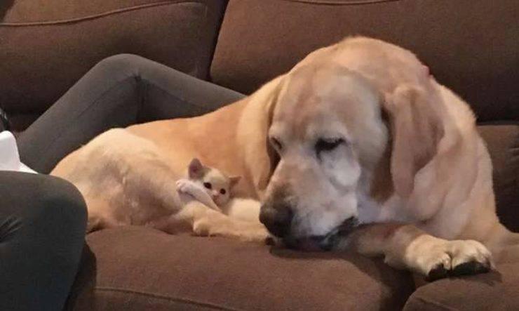 cane adotta gatto orfano