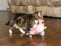 gatto peluche inseparabile