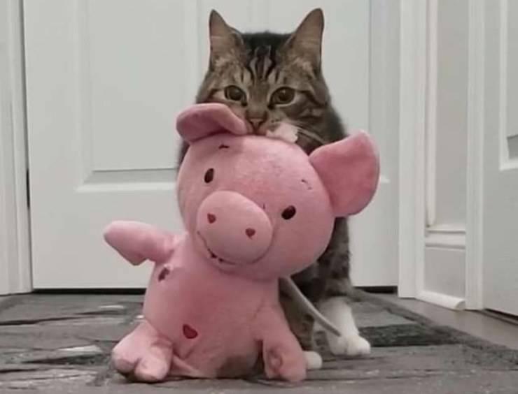 gatto maialino peluche inseparabile