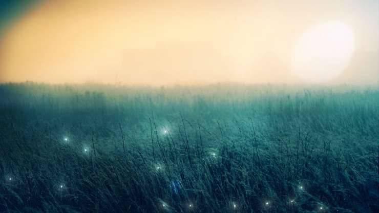 Paesaggio delle lucciole (Foto Pixabay)