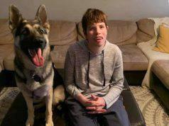 cane bambino disabile