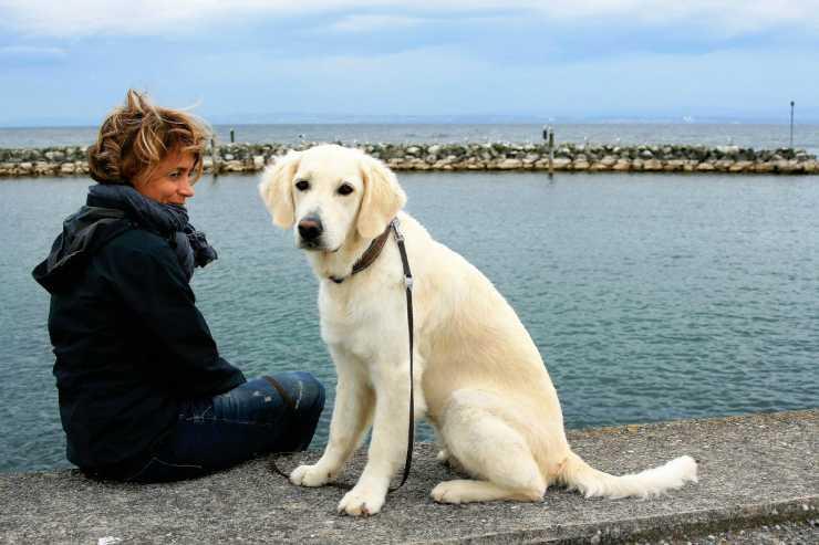 Empatia tra l'uomo e l'animale (Foto Pixabay)