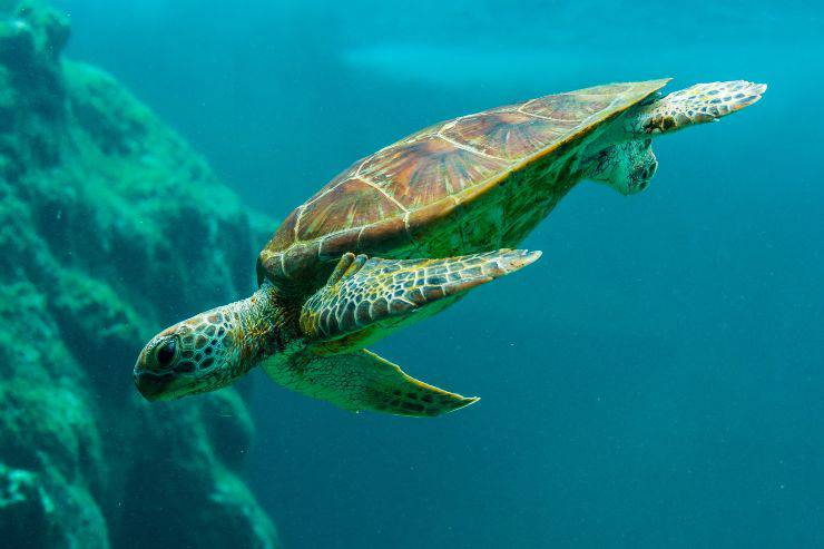 guscio tartaruga marina