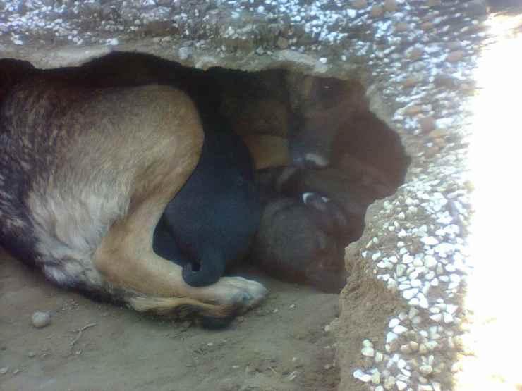 Il cane e i cuccioli (Foto Facebook)