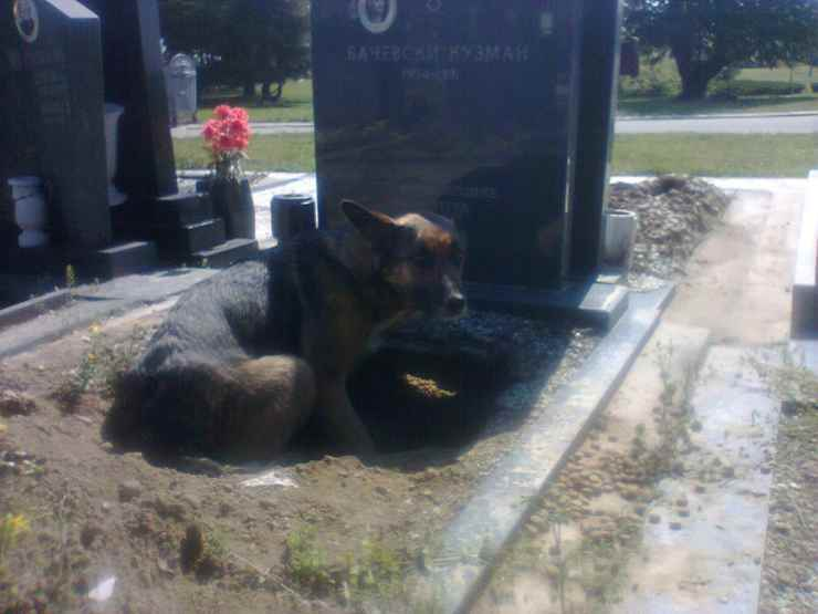La cagna nella buca al cimitero (Foto Facebook)
