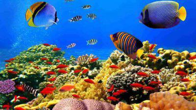 barriera corallina pesci
