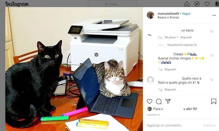 gatti scrivania pc