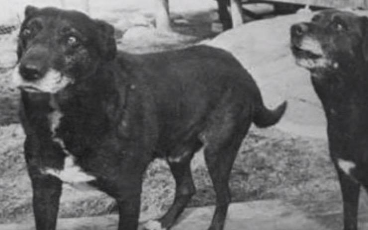 Il cane d'acqua San Giovanni