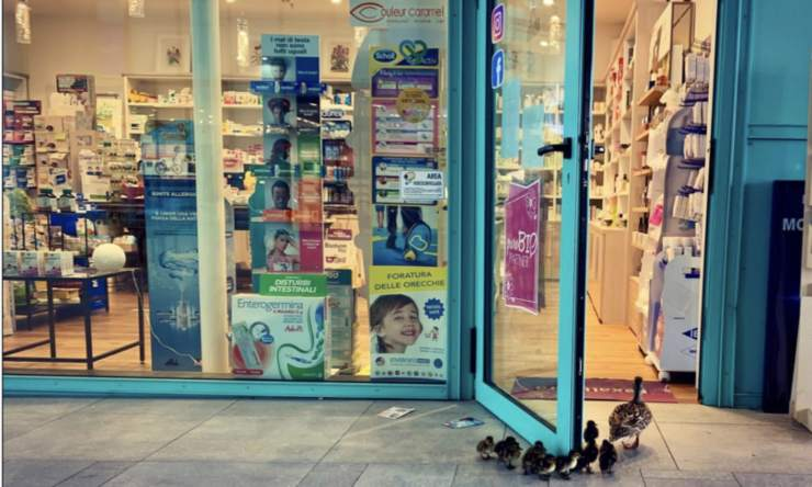 anatre farmacia firenze