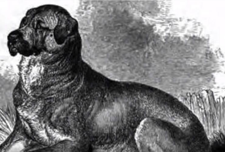 Il Dog cubano