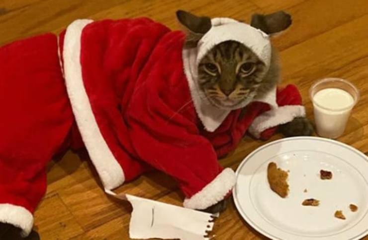 Il gatto in posa (Foto Instagram)