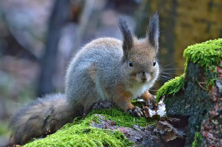 scoiattolo animale domestico