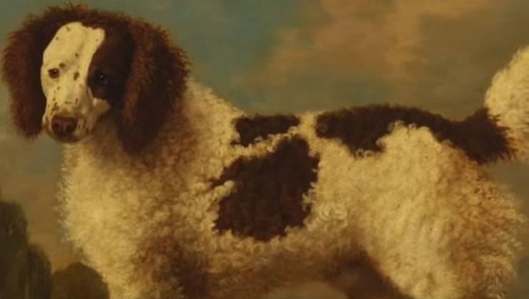 cani estinti Il Salish Buldog